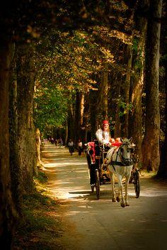 Fiaker in Velika Aleja - Horse-drawn fiaker carriage on the road to Vrelo Bosne