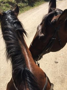 Cute Horses, Horse Love, Animals And Pets, Cute Animals, Horse Anatomy, Horse Ears, Most Beautiful Horses, Horse World, Horse Photos