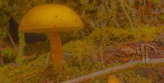 Soft Mushroom