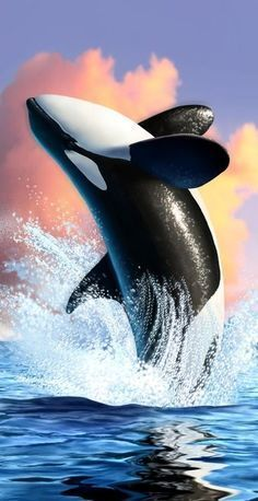 ORCA breaching at sunset.Killer Whale / Despite its name, the. Best Picture For Sealife Painting e Orcas, Animals And Pets, Cute Animals, Strange Animals, Fauna Marina, Tier Fotos, Killer Whales, Ocean Life, Exotic Pets
