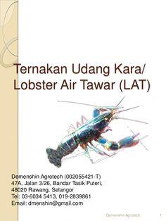 Cara ternak Udang kara lobster air tawar LAT di 017-2839861.