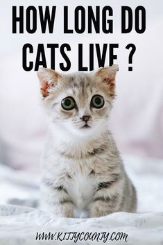 110 Cat Owners Should Know Ideas Cat Care Cat Owners Cats