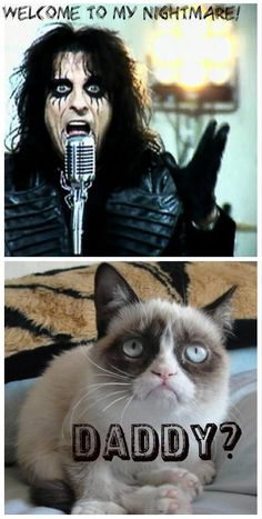 Funny Cats A Funny Cat Videos Compilation 2015 - Grumpy Cat - Ideas of Grumpy Cat - Image detail for -Grumpy Cat Daddy? Grumpy Cat Quotes, Funny Grumpy Cat Memes, Cat Jokes, Funny Animal Jokes, Funny Cat Videos, Cute Funny Animals, Funny Animal Pictures, Cute Cats, Funny Cats