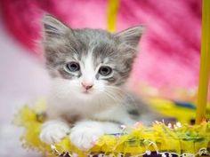 Un lindo gatito en una cesta