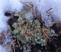 Alberta Native Plant Council Native Plants, Nativity, Yard, Christmas Nativity, Patio, The Nativity, Yards, Bethlehem, Courtyards