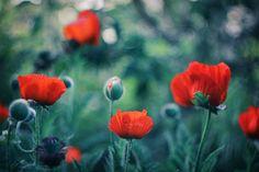 Photographer\'s photo Инна Сухова - ***