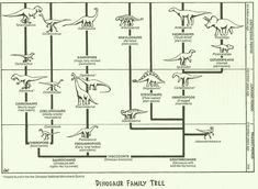 The Dinosaur Family Tree! - graphic - from the National Parks Service.