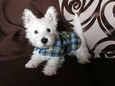 Love the coat! ~ re-pinned by doggiechecks.com♥•♥•♥