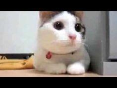 Supercats Episode 1 - an hilarious compilation