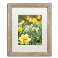 Alcott Hill Double Headed Daffodil Framed Photographic Print Size: