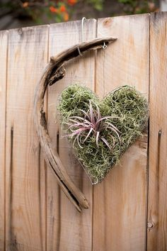 wire heart air plant ~ LIKE ~ I HAVE SOME HEART BASKETS & WIRE HEARTS SOMEWHERE AROUND HERE PUT UP.