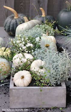 I love fall, white pumpkins Herbstdeko, Kürbiss. Rustic Fall Decor, Fall Home Decor, Autumn Home, Autumn Garden, Garden Fun, Autumn Fall, Garden Table, Garden Ideas, White Pumpkins