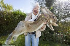 Predicen que el hijo del conejo más grande del mundo será aún MÁS GRANDE que su padre