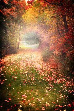 Enchanting Path Cuts Through Autumn