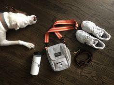 7 dog walking essentials   http://www.lolathepitty.com/7-essentials-for-dog-walks/