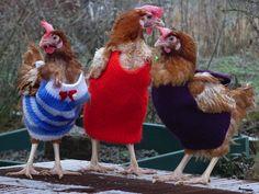 Att sticka tröjor till höns är inte så galet som det låter. Nicola Congden i brittiska Cornwall stickar små tröjor som värmer räddade burhöns medan deras fjädrar växer ut.