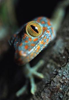 Isn't he a beautiful fellow?  Gecko