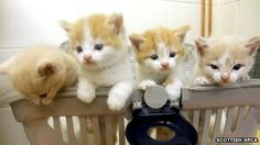 Adorable kittens found in an aircon unit.