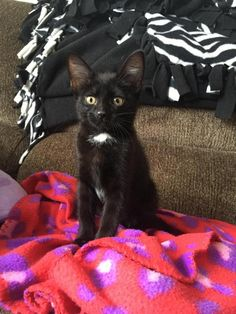 Meet Phoenix! Phoenix and her sister, FeFe, were brought to our rescue by some good samaritans. Phoenix is extremely sweet, snuggly, and friendly with a bit of an adventurous side. She enjoys the company of people and loves to follow her foster parent around the house!