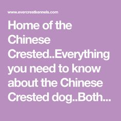 Home of the Chinese Crested..Everything you need to know about the Chinese Crested dog..Both hairless and Powder Puff...Detailed information on Structure, grooming , and understanding of the AKC Standard