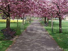 I need a tree-lined path.