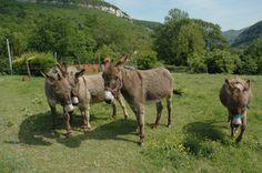Donkey love...<3