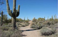 12. The Arizona Trail