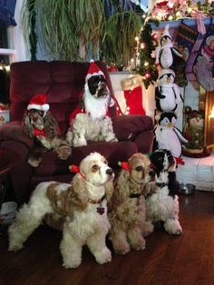 Cocker Spaniels dressed up for Christmas