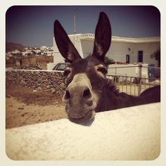 INSTA Magnified Images, Giraffe, Goats, Greece, In This Moment, Cute, Animals, Facebook, Summer