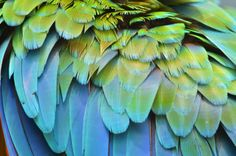 Why were dinosaurs covered in a cloak of feathers long before the early bird species Archaeopteryx first attempted flight? Researchers postulate that these ancient reptiles had a highly developed ability to discern color. Their hypothesis: The evolution of feathers made dinosaurs more colorful, which in turn had a profoundly positive impact on communication, the selection of mates and on dinosaurs' procreation.