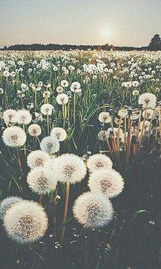 》(*(Puste(*(Blumen(*(Wiese(*(《