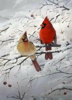Cardinal Pair on a Snow Day Pretty Birds, Love Birds, Beautiful Birds, Animals Beautiful, Animals And Pets, Cute Animals, State Birds, Cardinal Birds, Backyard Birds
