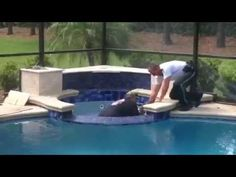 PCSO Deputies Help Rescue Deer From Pool Spa In Palm Harbor Home