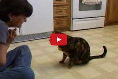 Cat Does Dog Tricks - very impressive