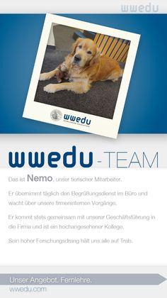 WWEDU-Team: Das ist Nemo, unser tierischer Mitarbeiter.  Er übernimmt täglich den Begrüßungsdienst im Büro und  wacht über unsere firmeninternen Vorgänge.  Er kommt stets gemeinsam mit unserer Geschäftsführung in  die Firma und ist ein hochangesehener Kollege.  Sein hoher Forschungsdrang hält uns alle auf Trab.
