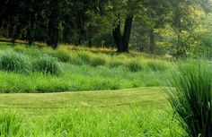 houzz grasses Chanticleer 1 lowres.jpg - contemporary - landscape - CYAN Horticulture