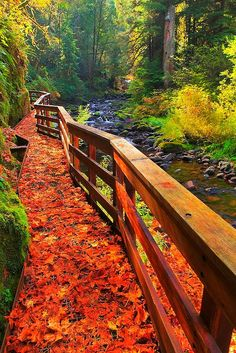 Sweet Creek Trail,  #Oregon