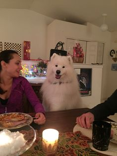 a spot at the table samoyed