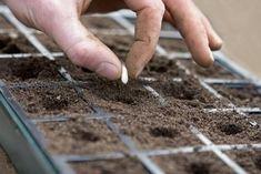"Planting Seeds - How to Grow Edible Plants Indoors - Vegetables ""On Demand"" - Bob Vila plantando sementes"