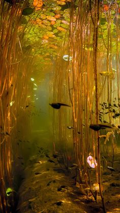 Water Tadpoles Underwater iPhone 8 wallpaper Wasser Kaulquappen Unterwasser iPhone 8 Tapete This image has. Underwater Photography, Nature Photography, Photography Humor, Tattoo Photography, Beautiful Places, Beautiful Pictures, Nature Aesthetic, Aesthetic Green, Underwater World