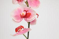 Pé Orquídea Rosa | A Loja do Gato Preto | #alojadogatopreto | #shoponline | referência 70960915