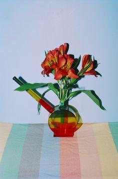 Hazy Daisies | VICE Canada #daisies #bongs #photography