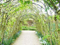Stromy, keře a byliny ve slevě | Prima Zahrada - vše pro vaši krásnou zahradu na jednom místě