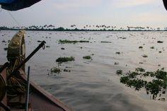 India floting plants