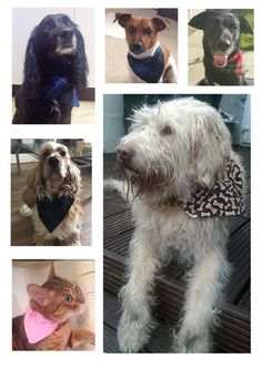 Handmade pet bandanas at Rosie's Craft Shop, Bandanas, Pets, Handmade, Crafts, Animals, Beautiful, Design, Hand Made
