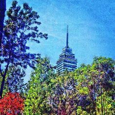 La Torre Latinoamericana entre los arboles. Zona Centro D.F.