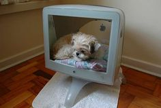 E-Waste Pet Beds - This Computer Monitor Dog Divan Gives a Broken Machine New Life (GALLERY)