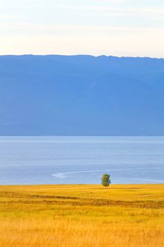 lonely tree by Artem Kreo on 500px
