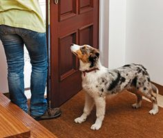 How to train your dog to not bolt out the door. Good article, I really like #3.