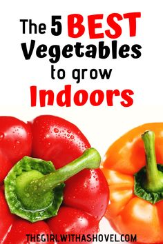 Are you new to indoor gardening? Or just looking for more inspiration? Make sure you're growing these 5 BEST vegetables to grow indoors! Easy, high-yield vegetables that people actually eat! Growing Vegetables Indoors, List Of Vegetables, Easy Vegetables To Grow, Easy Plants To Grow, Home Grown Vegetables, Planting Vegetables, Vegetable Gardening, Veggies, Indoor Farming